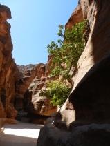 Siq, Petra, Jordanie