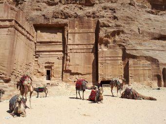 Des dromadaires à Petra, Jordanie
