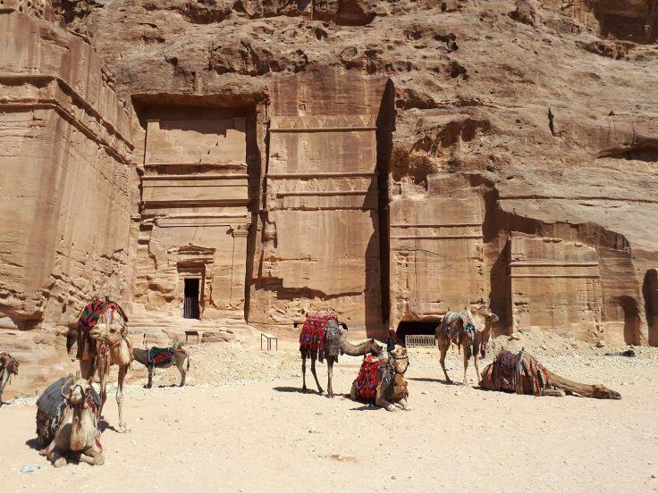 Des dromadaires à Petra - Jordanie